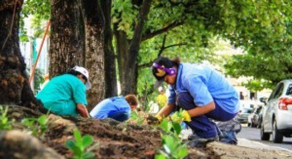 Meio Ambiente promove ações de arborização em Maceió
