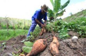 Autorizado o pagamento do Garantia-Safra para mais de 11 mil agricultores