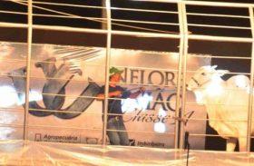 Touros Puros de Origem serão destaque no 10º Leilão Nelore União