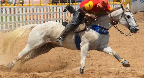 Número de cavalos quarto de milha cresce no país