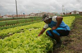 Plano Safra em Alagoas prevê mais recursos para agricultura familiar