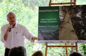 Alagoas será o segundo Estado com maior produção de eucalipto do Brasil