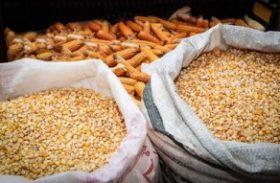 Safra de grãos este ano deverá ser 0,6% maior que a de 2015, mostra IBGE