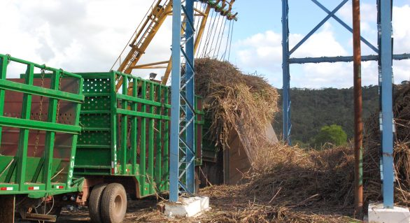 Começa a safra de cana 16/17 em Alagoas: expectativa é moer 20 milhões de ton