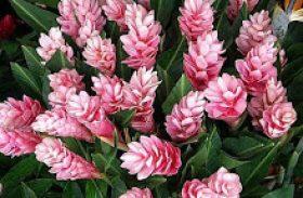 Senar-AL e Conflora promovem curso de flores tropicais