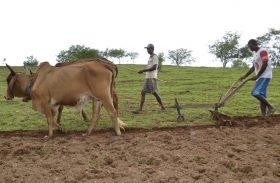FPI é acusada de proibir agricultor de arar terra com boi no sertão de Alagoas