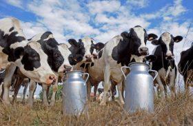 Proleite incentiva a competitividade do setor leiteiro de Alagoas