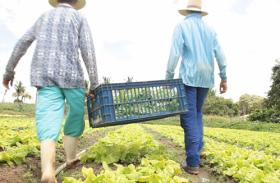 Iteral orienta agricultores sobre renegociação de dívidas do crédito fundiário