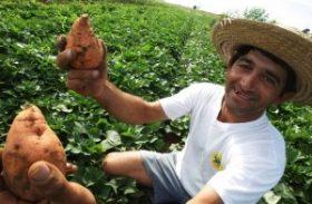 Governo compra 30% de seus produtos da agricultura familiar e melhora renda de produtores