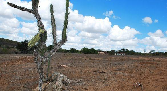 Comitê antecipa ações para minimizar efeitos da seca em Alagoas