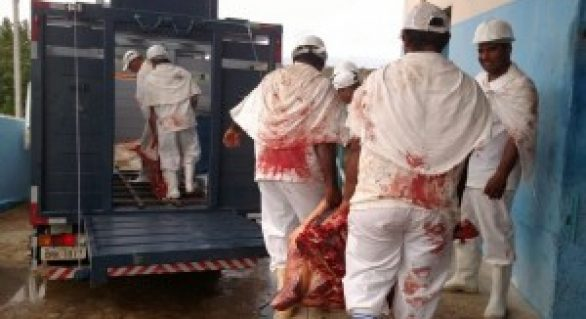 Governo do Estado vai elaborar modelo de abate regular de animais