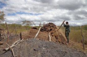 Fiscalização do IMA flagra carvoaria alimentada por madeira da caatinga