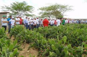 Fazenda no Sertão alagoano produz 500 toneladas de palma por hectare