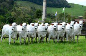IBC acreditam no bom momento da pecuária nacional