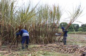 Trabalhadores rurais do setor sucroalcooleiro têm reajuste de 10,38%