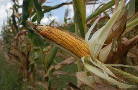 Participação da agropecuária no PIB sobe para 23% em 2015