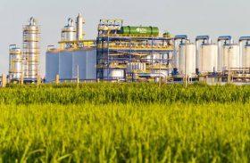 Cana-de-açúcar aumenta participação no balanço energético de Alagoas
