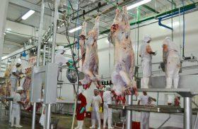 FrigoVale abate mais de 50 bovinos no primeiro dia de funcionamento