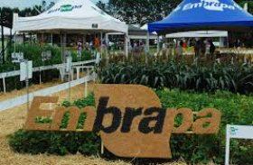 Parcerias com a Embrapa buscam aprimorar práticas agrícolas
