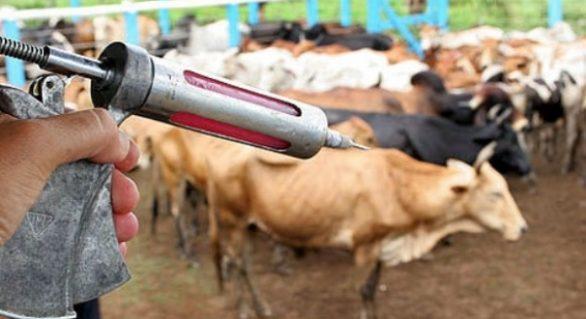 Criador tem até dia o 31 deste mês para vacinar o rebanho contra aftosa