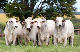 Brasil destina 80% da carne produzida ao mercado interno