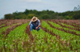 Plano Safra destinará R$ 202,88 bilhões para produtores rurais