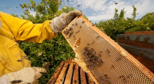 Associação de apicultores busca fomento para ampliação de oferta