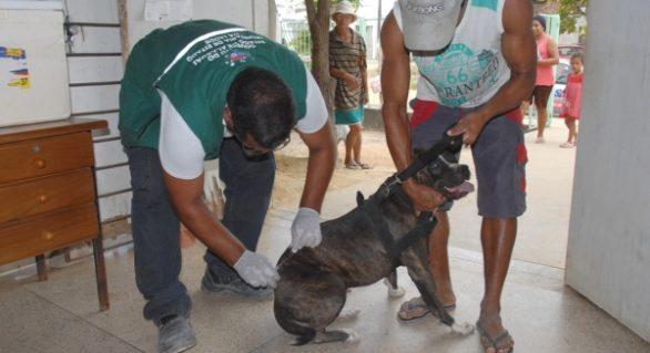 Estado de Alagoas não registra casos de raiva humana há uma década