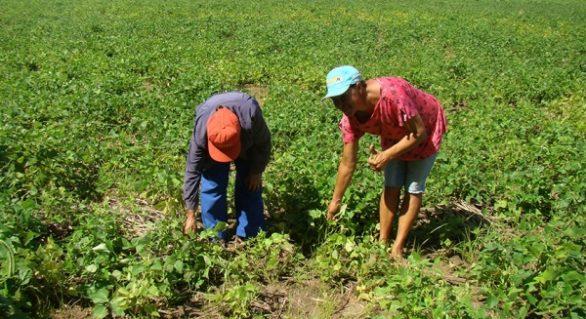 Programa da Sedetur muda a realidade de agricultores alagoanos