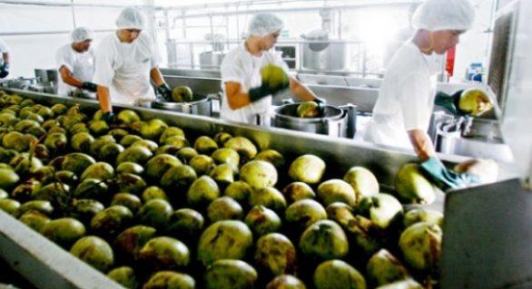 Renan Filho assina decreto sexta-feira (2) que valoriza produção de coco alagoana