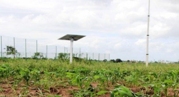 Projeto apoiado pela Fapeal ganha continuidade em Arapiraca