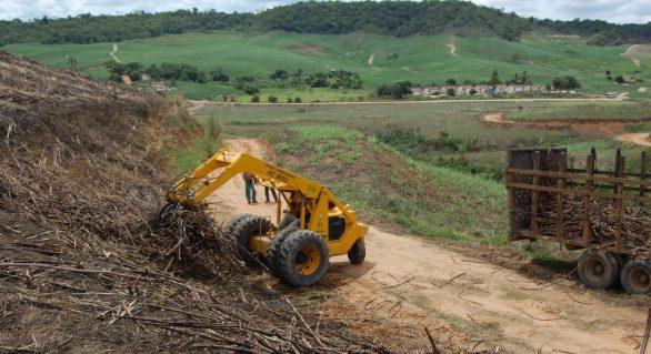Safra de cana será menor do que o esperado e deve chegar a 18,5 mi de toneladas em AL