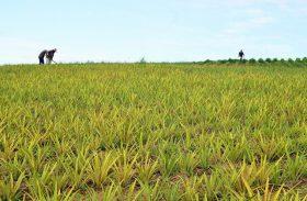 Unicafes dá um novo fôlego ao cooperativismo em Alagoas