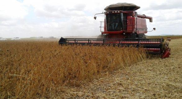 Pesquisa com soja em Alagoas atesta produtividade acima da média nacional