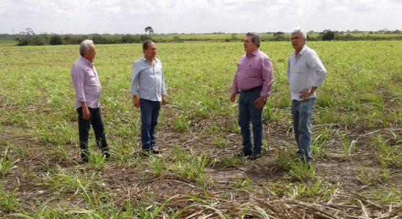 Governo de Alagoas construirá matadouro na Região Norte