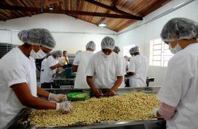 Fábrica de castanha será inaugurada segunda-feira (14), em Estrela de Alagoas
