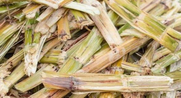 Governo de AL reforça ações para minimizar prejuízos com a seca