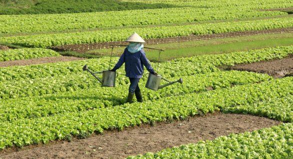 Setor agropecuário dinamiza economia de municípios alagoanos