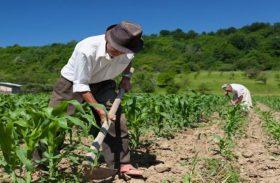 Programa Rural Legal vai beneficiar pequenos produtores