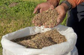Codevasf e Embrapa destacam importância da Emater para produção de arroz em Alagoas