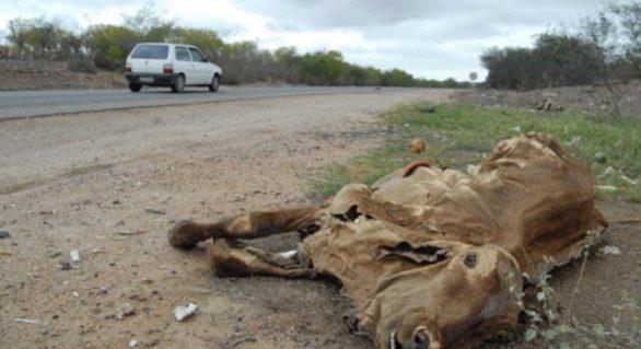 Seca: desde agosto sem chuva, produtor da Dois Riacho está a ponto de abandonar atividade