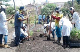 Seagri doa mudas de plantas medicinais para União dos Palmares