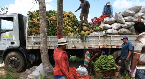 Estado promove primeiro seminário sobre fruticultura voltado a produtores de AL