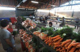 Preço da cebola cai e chuva e calor prejudicam produção de alface e cenoura
