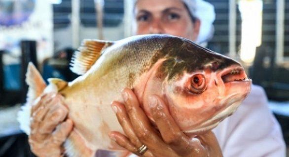 Agricultura promove Feira do Peixe Vivo nesta quarta e quinta-feira