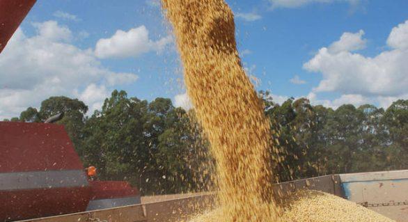 Preço da soja reage pela primeira vez em 2017