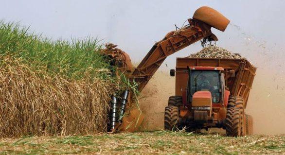 Alagoas sob ameaça: Crise na agroindústria afeta presente e futuro do estado