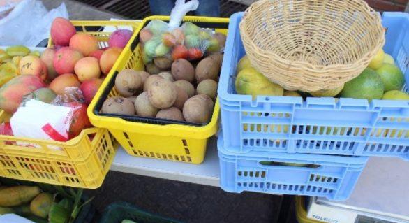 Semarh promove feira de produtos orgânicos nesta terça-feira (3)