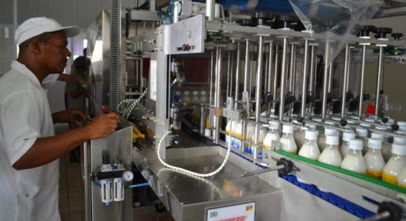 Cooperativa Pindorama produzirá óleo de coco extravirgem a partir de junho