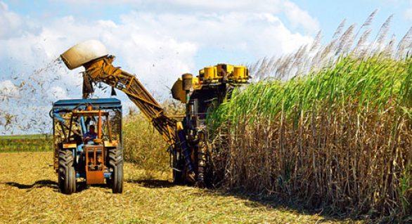 Conab estima safra 17/18 em Alagoas com 15,5 milhões de toneladas de cana